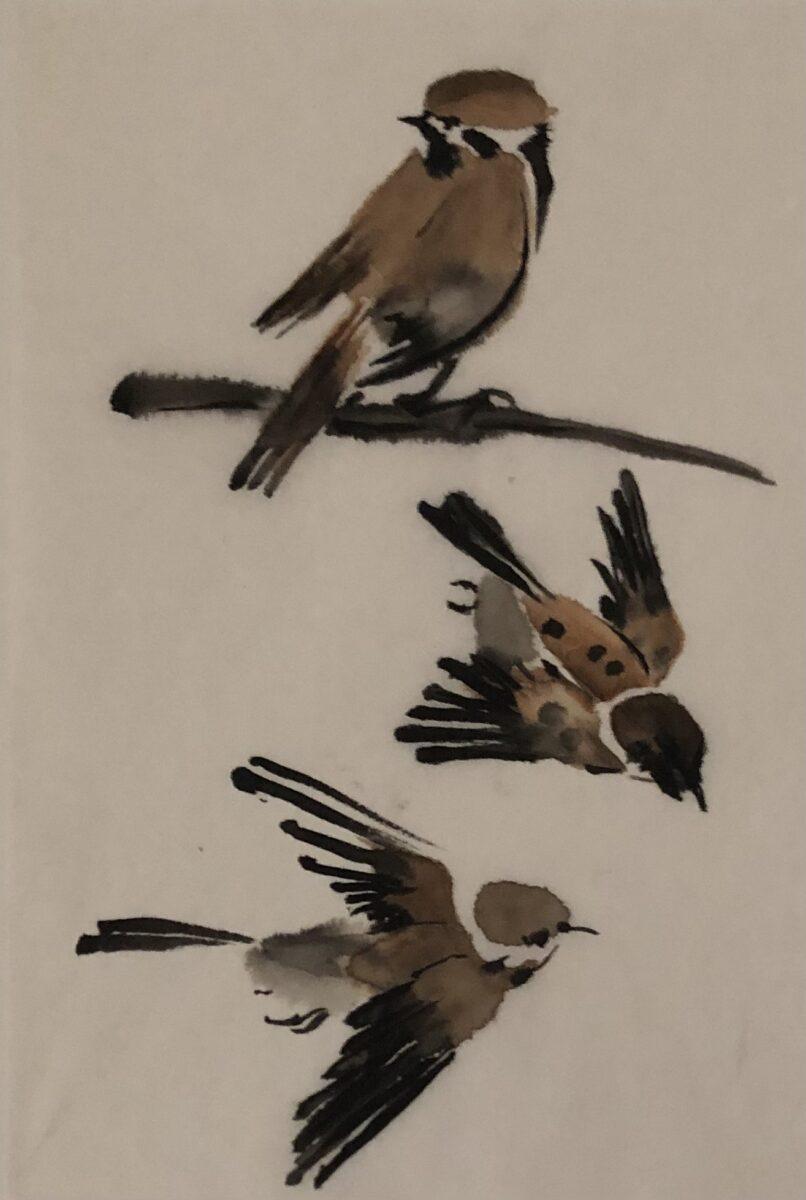 vogels - 4